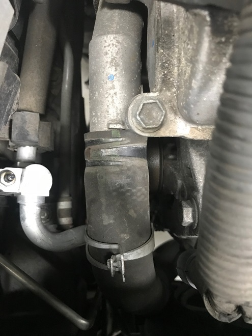 Lower radiator hose at thermostat housing
