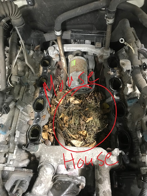 Gx470 Check Engine Light P0325 And P0330 Getting To The Bottom Of Intake Find A Mouse House